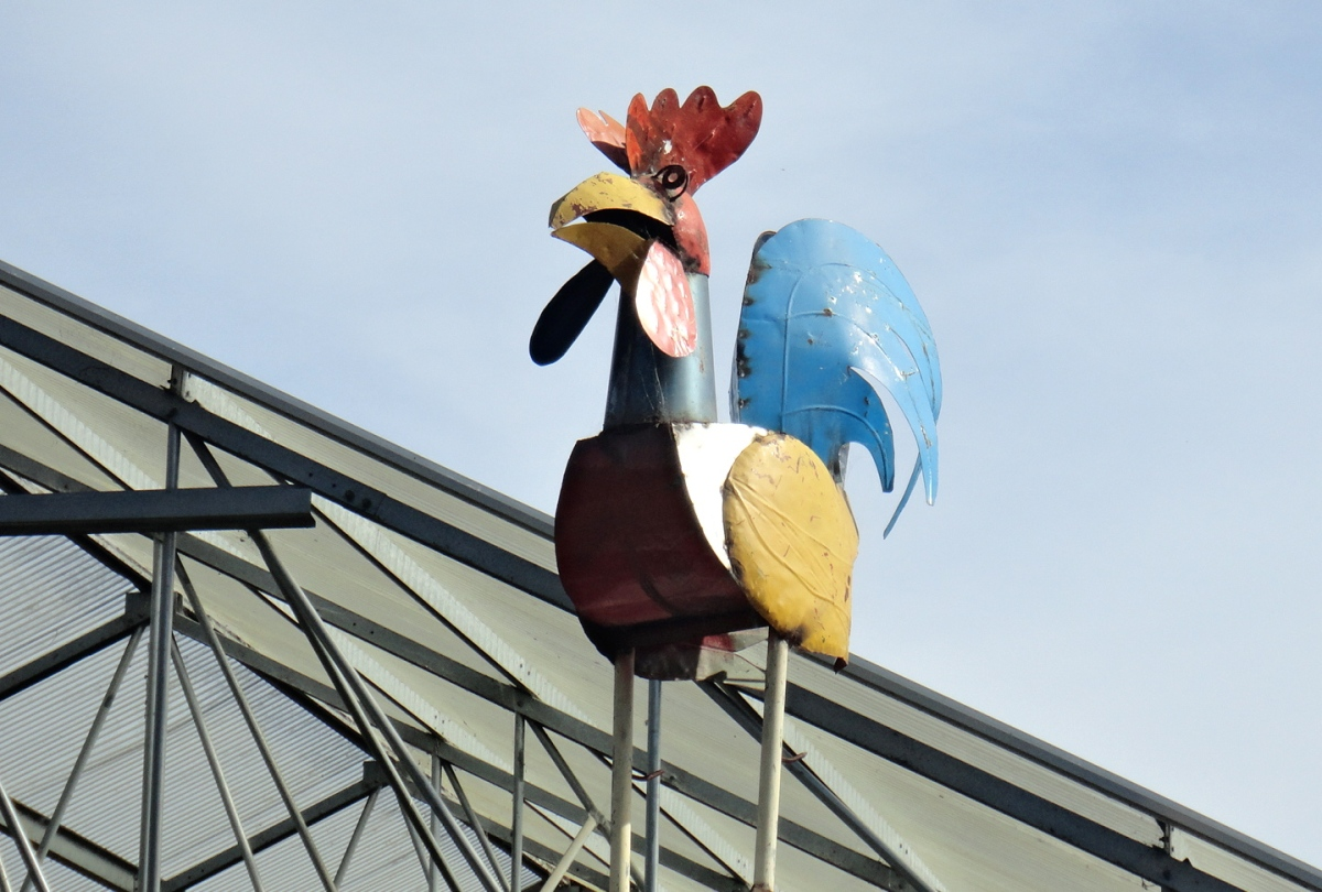.....and a rooster.